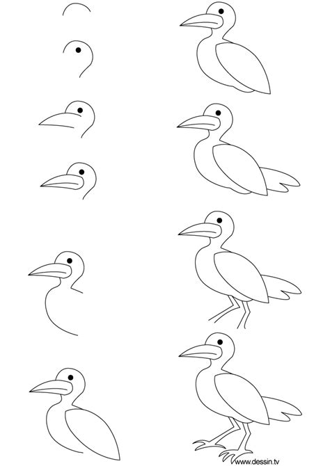 how to draw sea birds drawing seagull