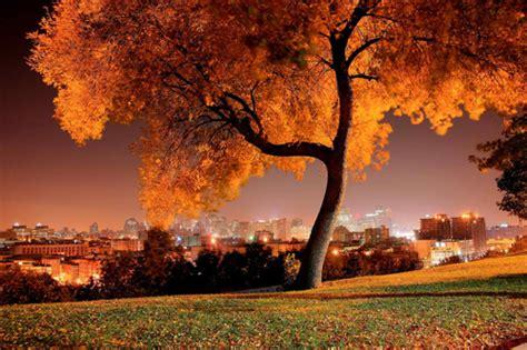 my tree 30 naturally stunning pictures of trees naldz graphics