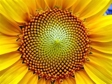 flower of life pattern in nature 10 edge effect deep green permaculture