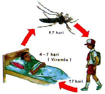Obat Ikan Abate montan chikungunya