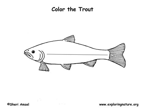 trout coloring page