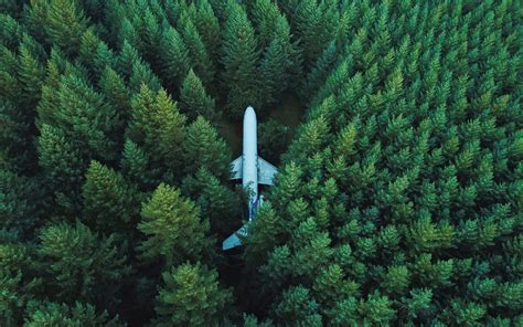 wallpaper forest plane aircraft surrounded aerial view