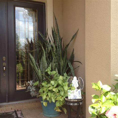 Front Door Potted Plants Potted Plant Outside Front Door Happy Home Outside