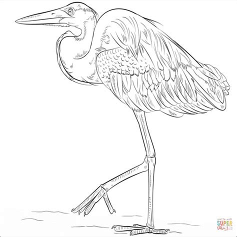 great blue heron coloring page best coloring pages