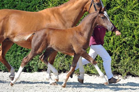 To Js Quina horseman auction levi js