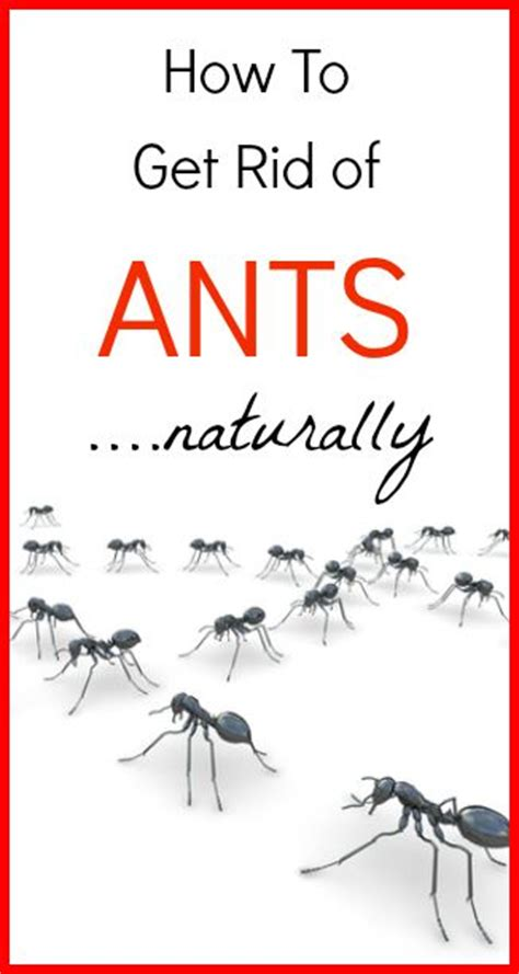 how to get rid of ants in bedroom pin by kelly winters primally inspired on homesteading