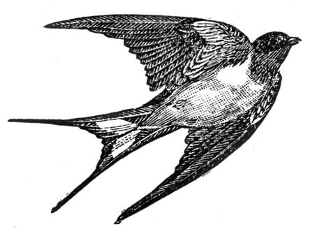 swallow clipart free download clip vintage clip dictionary birds the graphics