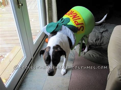 can dogs olive 157 best images about pet costumes on