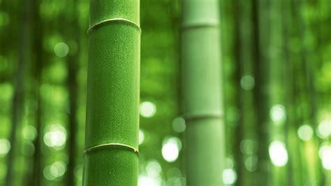 bamboo backgrounds   pixelstalknet
