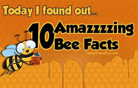 five bizzy honey bees the and factual of the honey bee captivating educational and fact filled picture book about bees for toddlers children and adults books 10 amazing bee facts techeblog