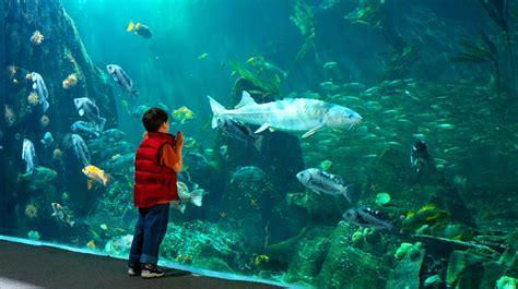 vancouver aquarium 50 new year vancouver aquarium student sleepovers