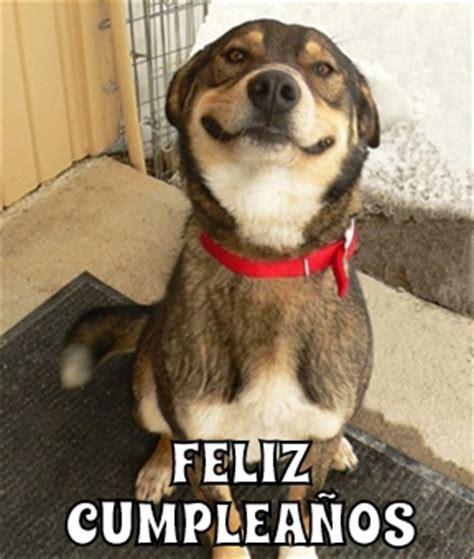 imagenes graciosas de cumpleaños con animales feliz cumplea 241 os memes en quebolu