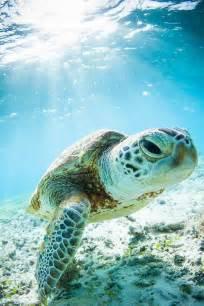 rencontre sous l eau tortue animaux animals