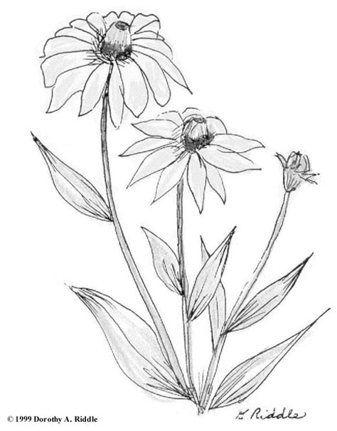 coloring pictures of wildflowers wildflower coloring pages coloring pages ideas