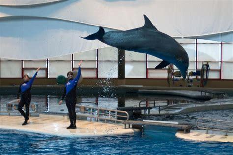 Aquarium Central Filter Dolphin Excellent baltimore aquarium dolphin show our planet