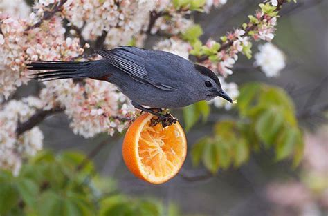 what do backyard birds eat 120 best bird feeding images on pinterest