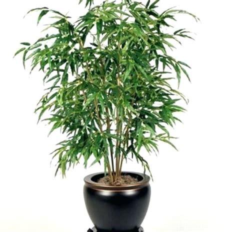 indoor trees that don t need light best low light houseplants