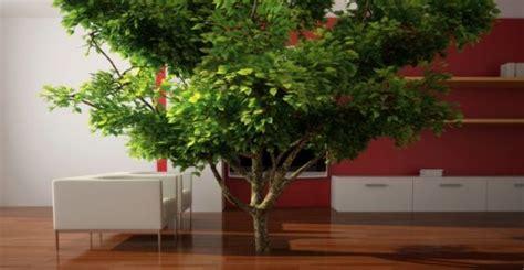alberi da interno coltivazione indoor le 8 migliori piante da crescere