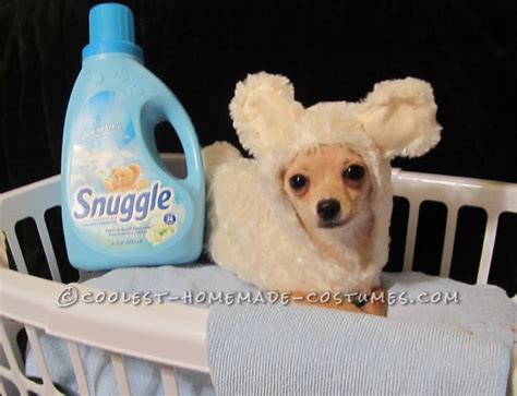 Best Easy Cheap Detox For Dogs by Easy Cheap Snuggle Costume For Pets
