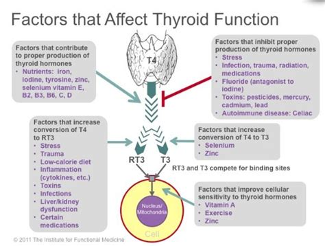 Does Detox Affect Thyroid by Factors That Affect Thyroid Function Drjockers