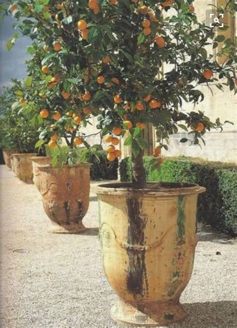 patio orange tree pin by allison interiors allison stewart on a