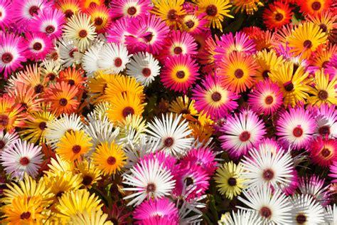 Vaste Planten Die Hele Zomer Bloeien by 6 Geschikte Planten Voor Balkon Terras