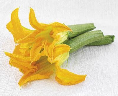 zucchino da fiore vendita piantine di zucchino da fiore vaso 10