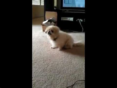 Cat Dragging Bum On Floor by Scoot Doovi