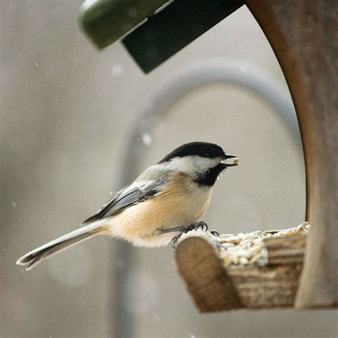 attracting backyard birds attract songbirds to your winter garden