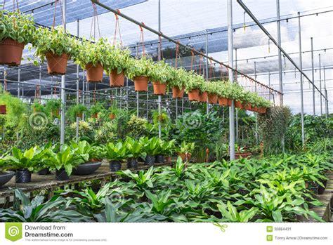 Garden Nursery by Plant Nursery Stock Image Image 35884431