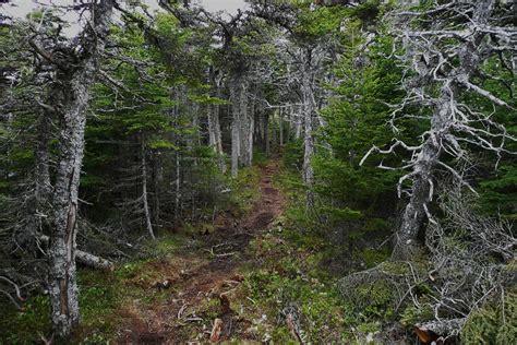 imagenes de paisajes que den miedo cuando los bosques son de miedo bosques encantados