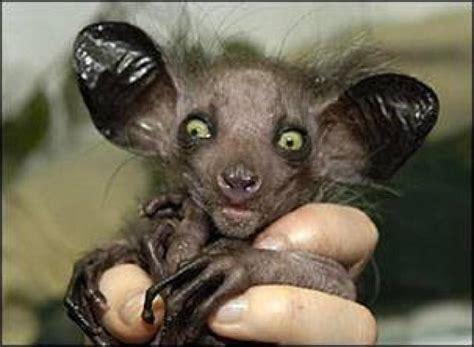 imagenes animales raros ranking de los 10 animales mas raros del mundo listas en