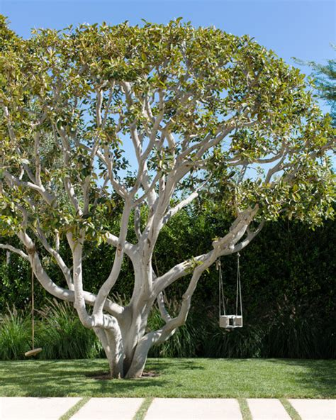 hanging a tree swing tree swing photos design ideas remodel and decor lonny