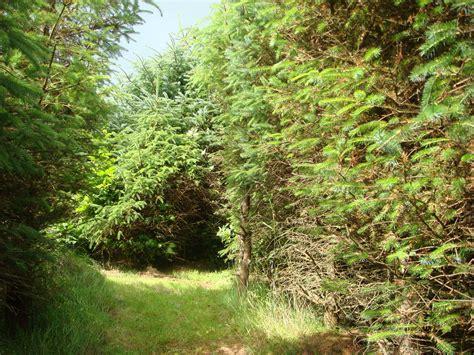 woodland tree olav s wood orkney scotland woodland trees and shrubs