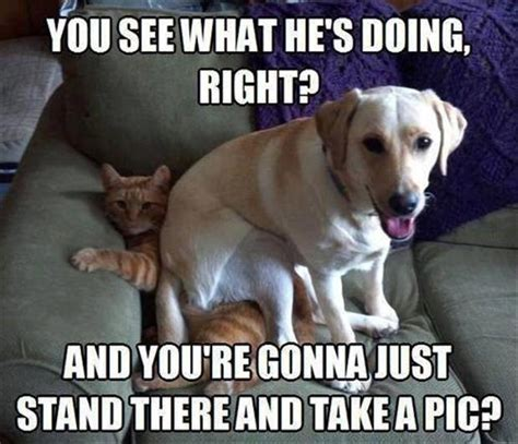 Funny Fighting Memes - funny dog and cat fighting dump a day