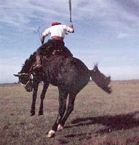 doma de caballos a la caballos fotos