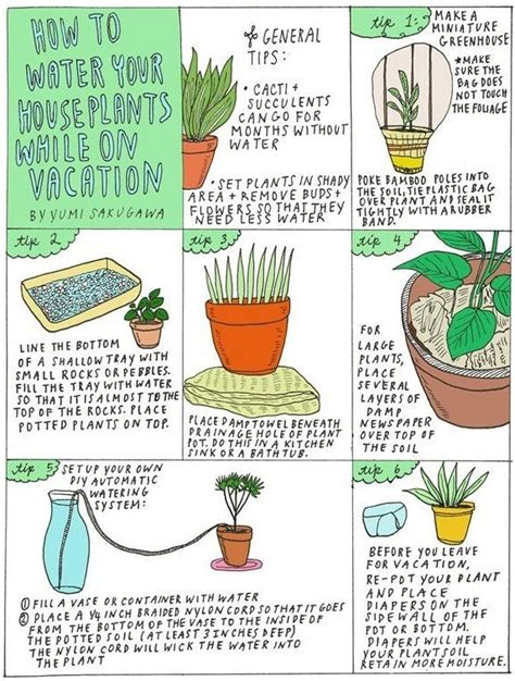 how to take care of plants while on vacation greenmylife