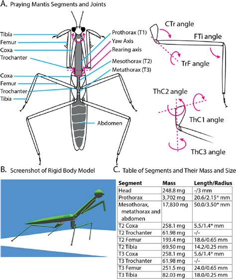 mantis workflow a segments and joints of the praying mantis