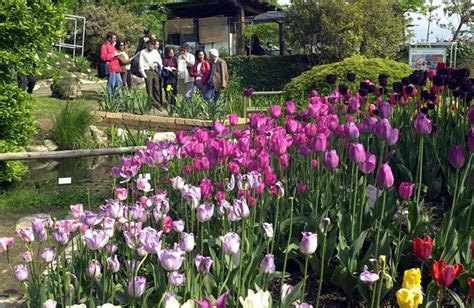 giardino botanico bergamo primavera all orto botanico foto lo spettacolo dei 2000