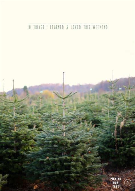 40 best i d love to own a tree farm images on pinterest