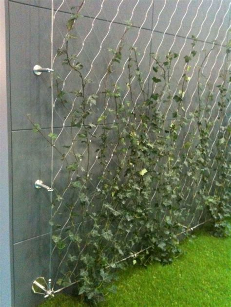 climbing plant support systems tension wire trellis what sailor wouldn t this be