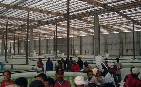 Bibit Belut Di Bandung budidaya belut di madagaskar entrepreneurship on fisheries