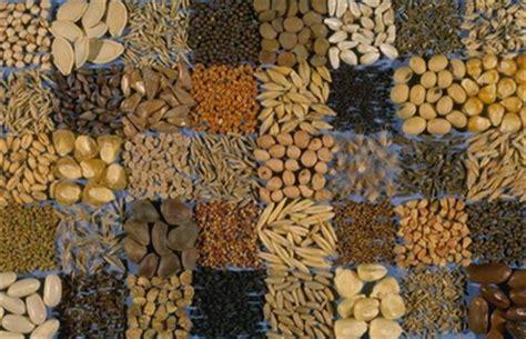 alimentazione naturale gatto rischio micotossine pet food alimentazione naturale nel
