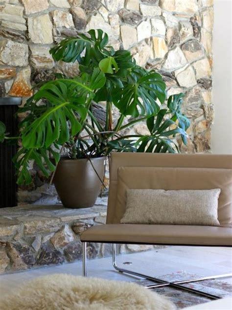 maintenance modern interior decorating  house plants