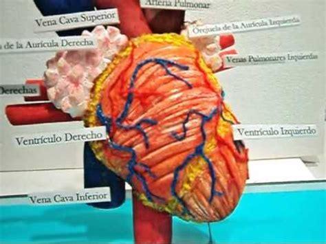 como hacer maquetas de corazon maqueta el corazon y sus partes youtube