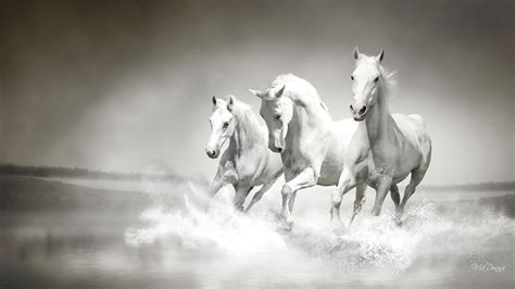 wallpaper hd 1920x1080 horses white horse wallpapers pictures images
