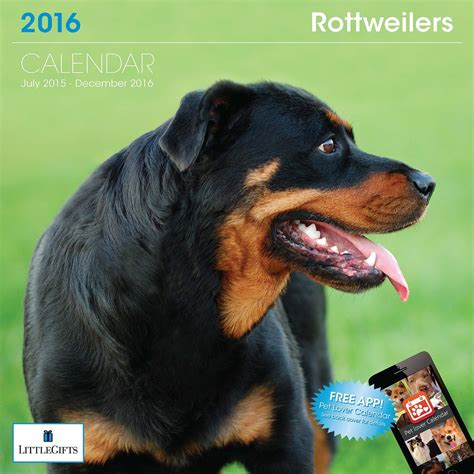 rottweiler gift largest rottweiler on record breeds picture