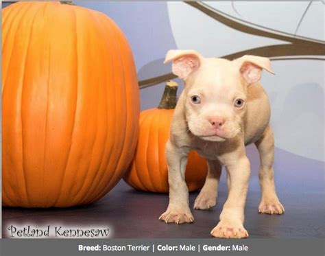 petland puppy prices petland is selling this puppy for 5 500
