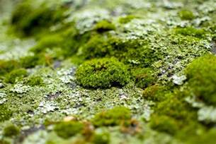 How Can I Get Moss to Grow in My Garden?