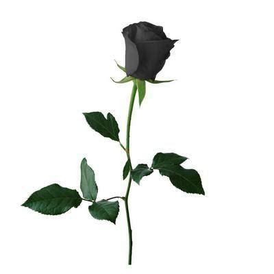 The Black Rose Poems Think English Black Roses For